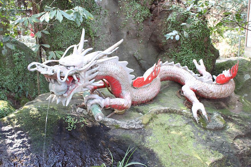 霧島神社の大クス